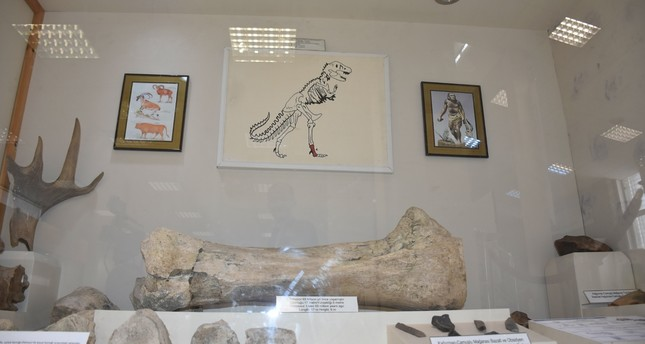 The fossil, which was unearthed in an excavation in the village of Demirkent in Kars province's Akyaka district, belongs to a dinosaur from the Tyrannosaurus genus that lived 65 million years ago.