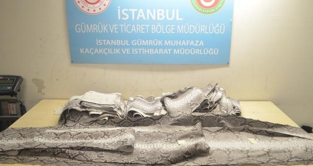 ضبط جلود أفاعي نادرة بحوزة مسافر قادم من أبو ظبي لمطار أتاتورك بإسطنبول