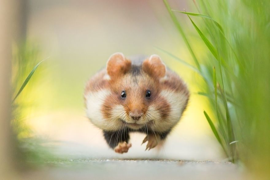 Run! - Remarkable Award in Animals In Their Environment category