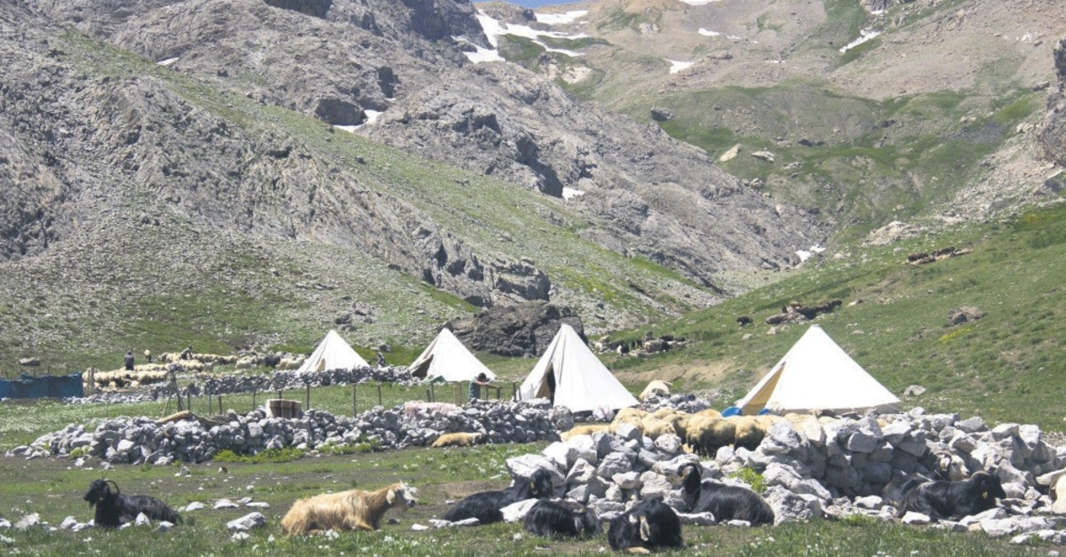 Nomads set up their tents on the challenging highlands and keep guard with Kangal dogs to protect cattle against dangers.