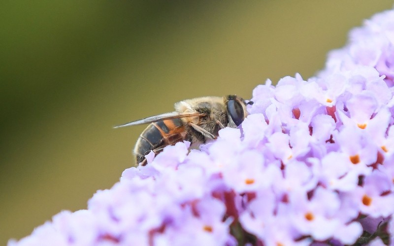 This file photo taken on July 08, 2018 in Locon near Lille, shows a bee on a flower (AFP File Photo)