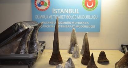 Turkish authorities seize $2.2 million worth of rhino horns at Atatürk Airport