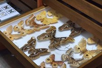 Decades of Turkey's insects on display at Istanbul museum