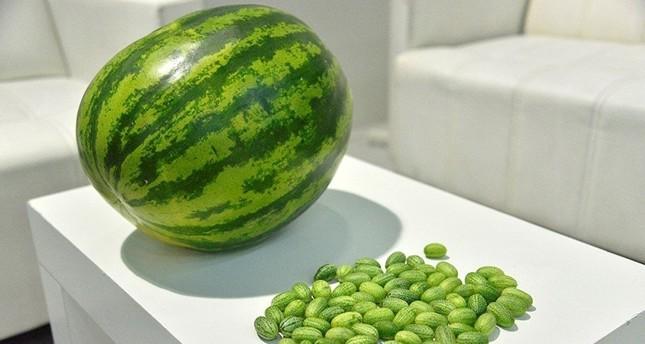 Türkische Firma züchtet Mini-Wassermelonen