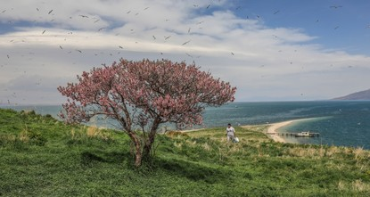 Island in Lake Van promises fine mixture of nature, history