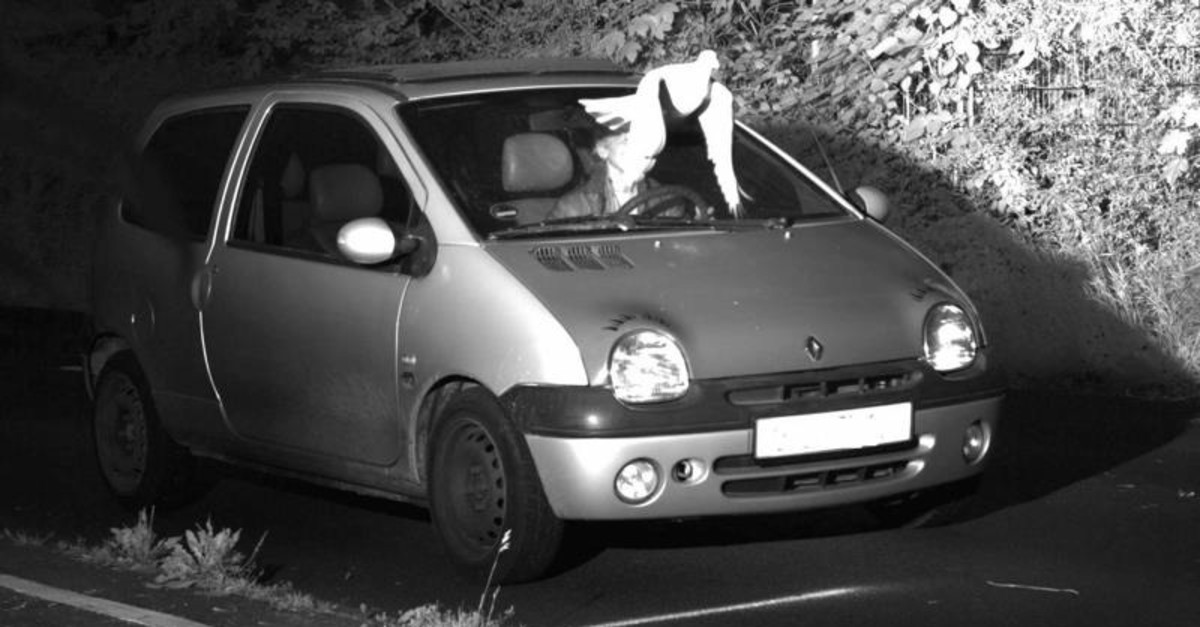 This Tuesday, May 21, 2019 speed camera picture provided by the Police in Viersen, Germany, shows a Pigeon in front of the windscreen of a car. (AP Photo)
