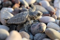 Ministry holds competition for better care of loggerhead turtles