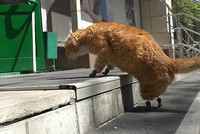 Russian amputee cat walks again thanks to 4 prosthetic paws