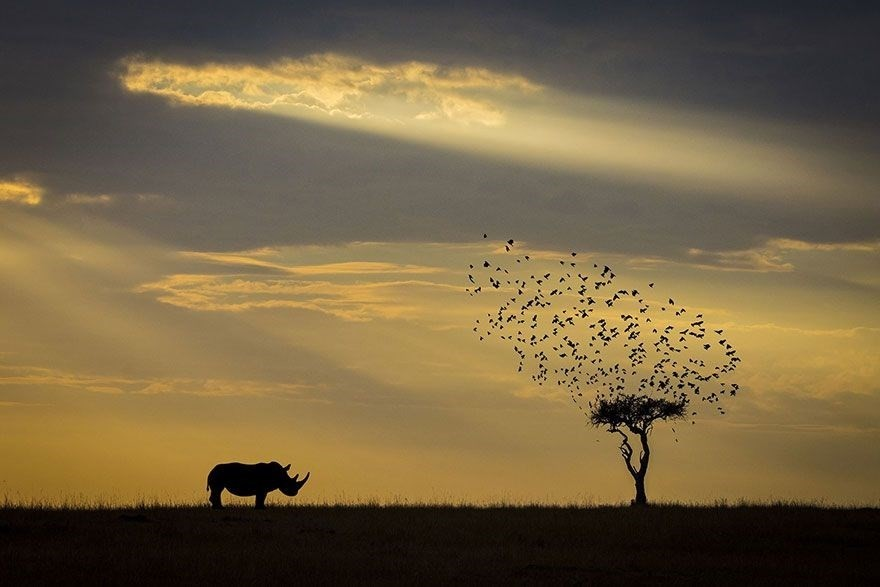 Rhino Silhouette, Kenya - Honorable Mention, Animals in Their Environment