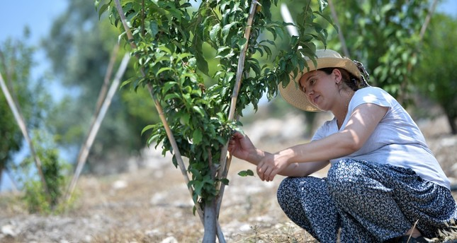 Özge Yıldırım tends to a plum tree in the orchard she created thanks to state funds in a village in Mersin.