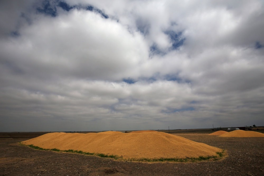 Mounds of barley grains are seen in Madrigal de las Altas Torres, Spain. Researchers calculated that by 2050, higher CO2 concentrations will sap the protein contents of barley by 14.6 percent.