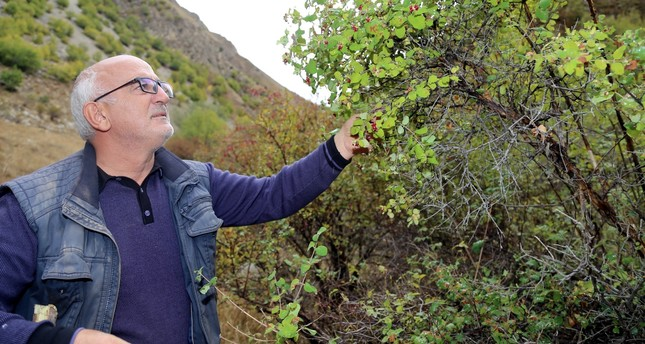 Walking for hours in forests and mountains around Anatolia, Kadir Yaşar (above) has made it his life's work to find and identify endemic plants of Anatolia.