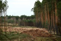 Tesla gets German approval to destroy forest for Gigafactory in Berlin