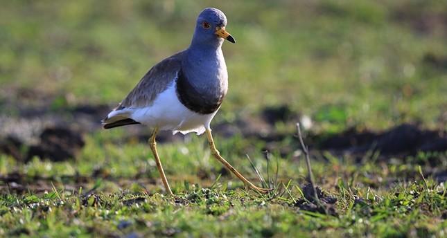 اكتشاف نوع جديد من الطيور في تركيا