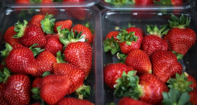 Punnets of strawberries are stacked at BR Brooks & Son farm in Faversham, south east England on June 29, 2018. (AFP Photo)