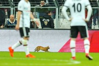 UEFA charges Beşiktaş after 'cat sneaks onto pitch' during Bayern Munich match
