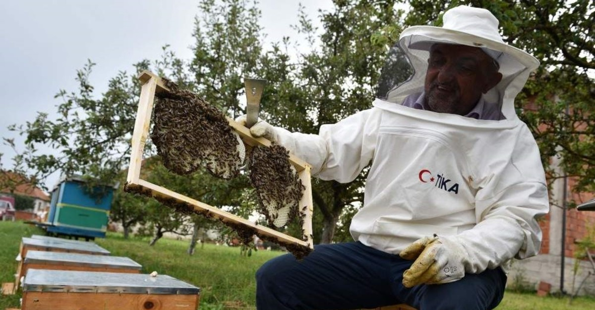 Beekeeping will help families in rural Kosovo earn extra income.