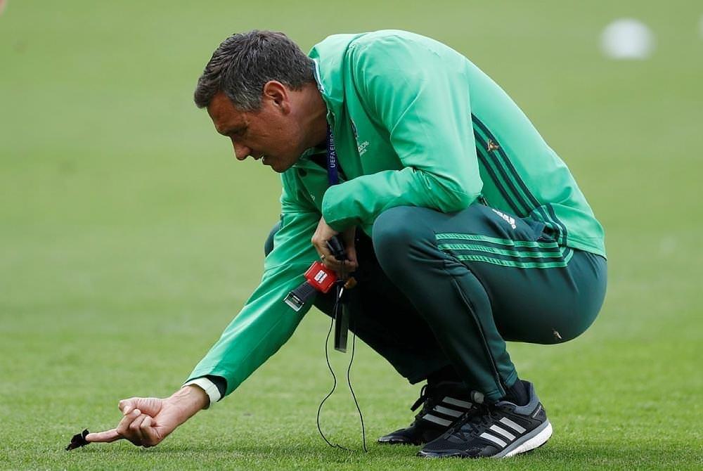 Moths invade Stade de France ahead of Euro 2016 final
