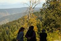 ألوان الخريف الساحرة تضفي جاذبية خاصة على غابات البحر الأسود