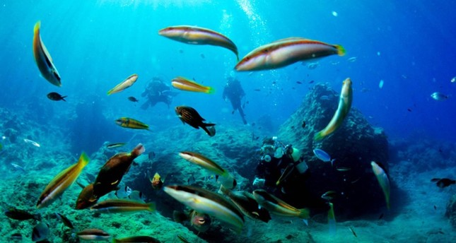 Marine life in Turkey's seas are in danger due to invader species coming from the Red Sea.