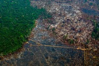 Amazon deforestation at worst since 2008, Brazil says