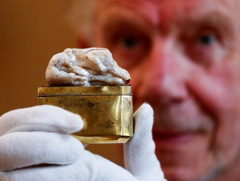Herman Dommisse, the owner of The Sleeping Lion Pearl, which once belonged to Catherine the Great and believed to be the world's largest freshwater pearl, shows the pearl before being auctioned in the Hague, Netherlands May 28, 2018 (Reuters Photo)