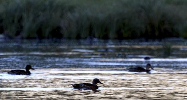 Lake in northeastern Turkey sanctuary for wild ducks