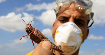 Desert locusts cause of 'worst situation in 25 years' for food security