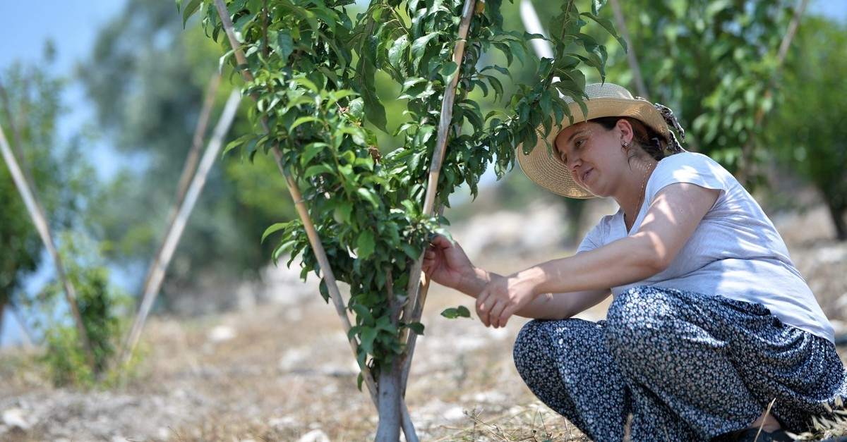 u00d6zge Yu0131ldu0131ru0131m tends to a plum tree in the orchard she created thanks to state funds in a village in Mersin.