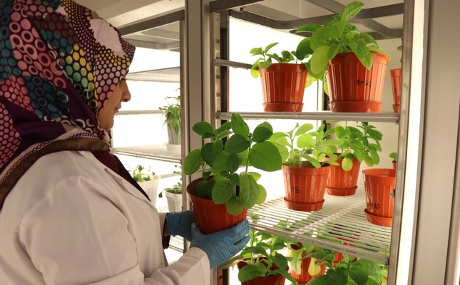 Facing extinction, endemic plants grown in lab