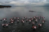 الفلامنغو ضيف متألق على بحيرة هرسك في يالوفا التركية