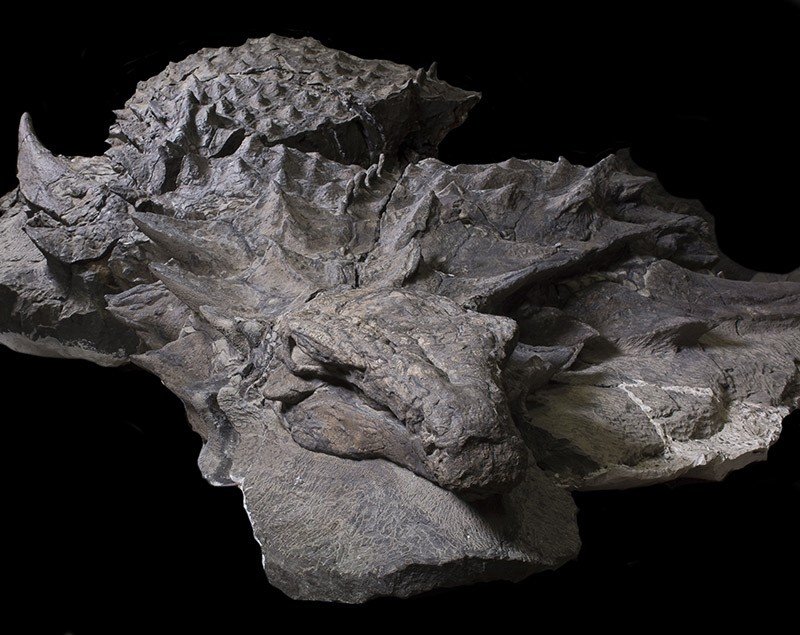 Photo Courtesy of Royal Tyrrell Museum