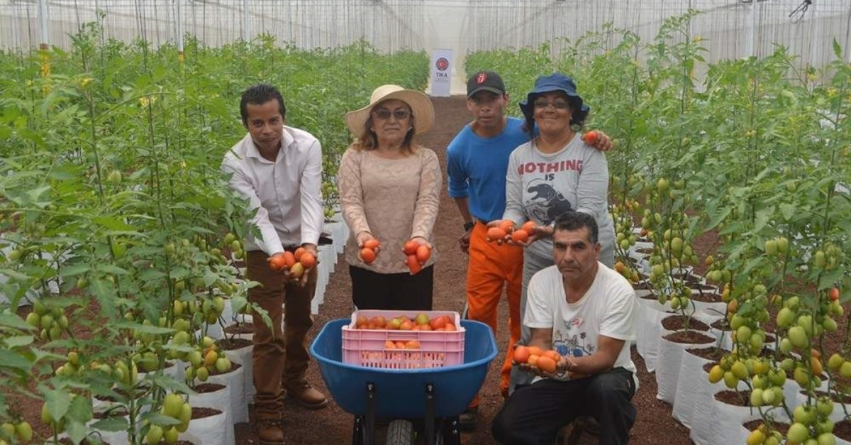 T?KA's projects in Mexico include setting up greenhouses. (AA Photo)