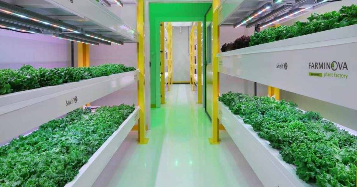 The factory produces plants in a closed area without soil and without sun, using 95% less water. (DHA Photo)