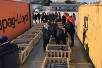 Joint Turkish-Greek anti-narcotics operation fetches large amount of drugs