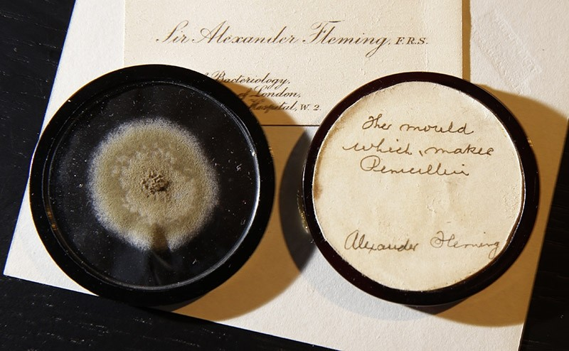 In this photo taken on Thursday, Feb. 16, 2017, a capsule of original penicillin mold from which Alexander Fleming made the drug known as penicillin on view at Bonham's auction house in London. (AP Photo)
