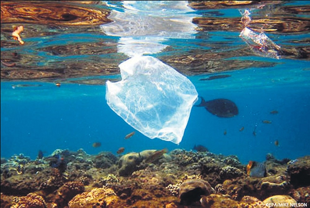 The worldu2019s oceans and their inhabitants suffer from excessive plastic bag usage.