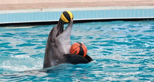 Dolphins' playful moments amuse viewers in Konyaaltı