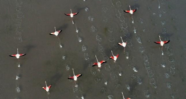 طيور الفلامنكو من الجو (الأناضول)
