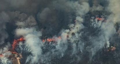 لماذا نحتاج إلى حرائق الغابات؟!