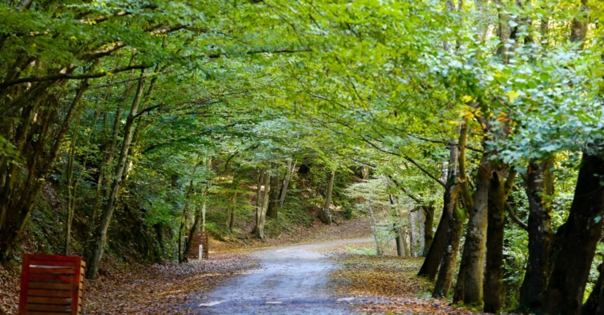 Belgrad Forest in Istanbul in the fall (Sabah File Photo)