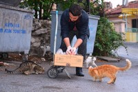 Metehan Erdem, 22, a university student living in Kütahya, feeds over 300 stray cats with the leftovers he collects from restaurants and butchers every day. Thanks to his approach toward stray...