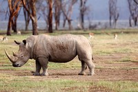 Rhino poaching in South Africa sees 'significant' decline, minister says