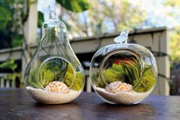 Terrariums: Miniature gardens for plant-obsessed urban dwellers
