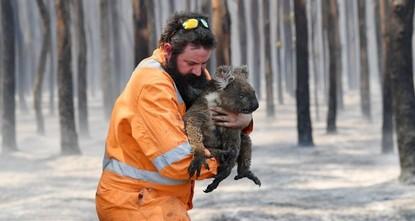 Volunteers knit mittens for koalas burnt by Australian fires