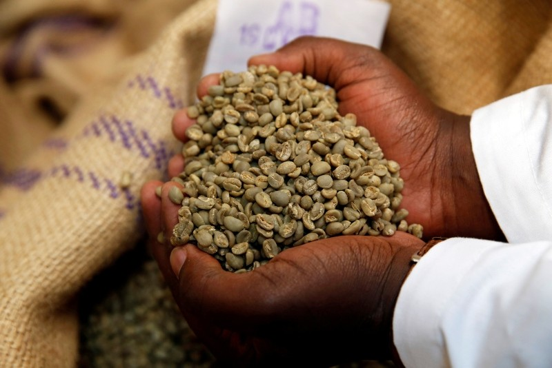 An employee shows coffee beans at the Central Kenya Coffee Mill near Nyeri, Kenya, March 15, 2018 (Reuters File Photo)