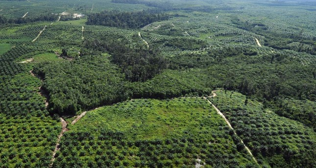 HSBC destroying Indonesian rainforests by funding palm oil