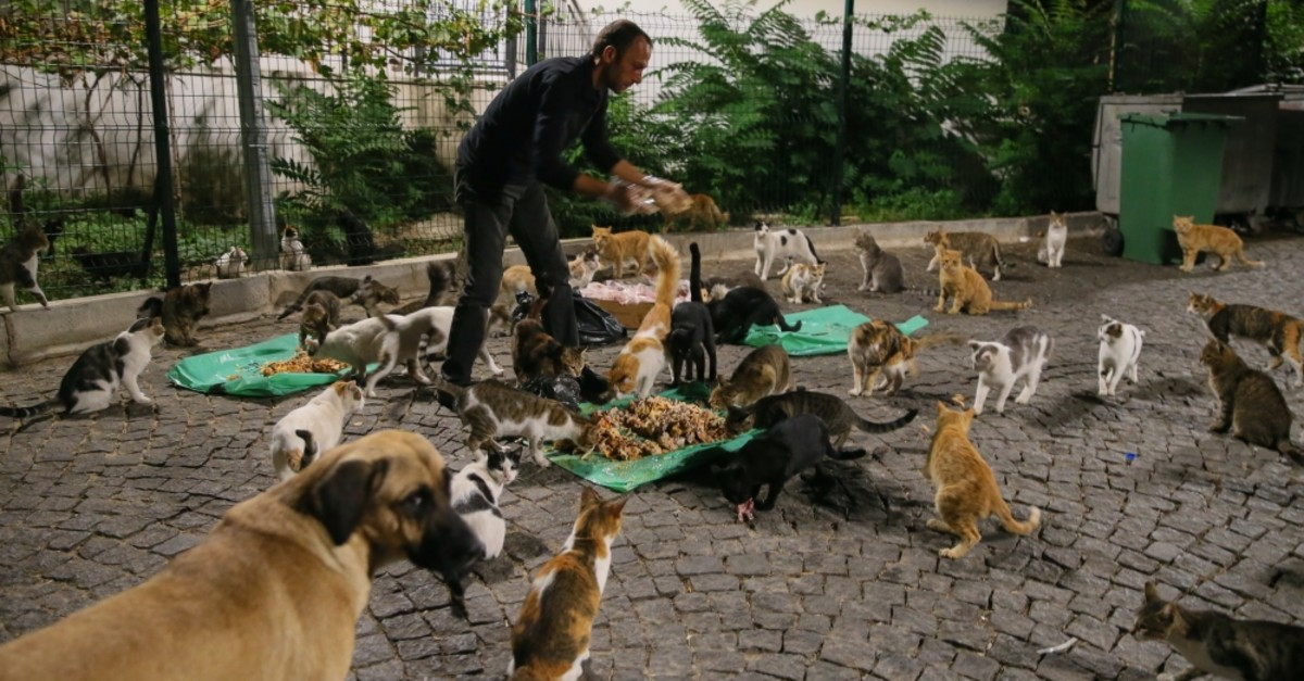 Murat Mogol feeds nearly 300 stray cats and dogs every day.