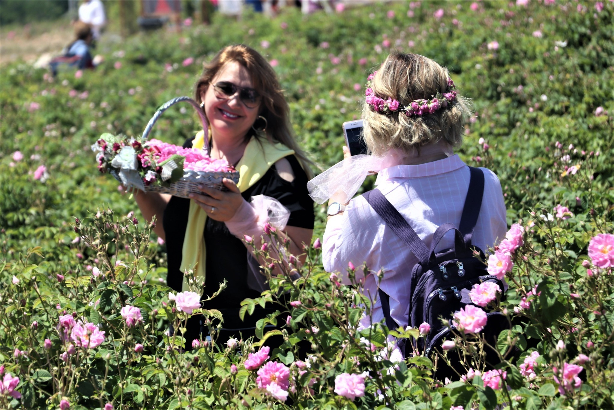 Tourists can also take part and learn the process of rose oil production from petals.