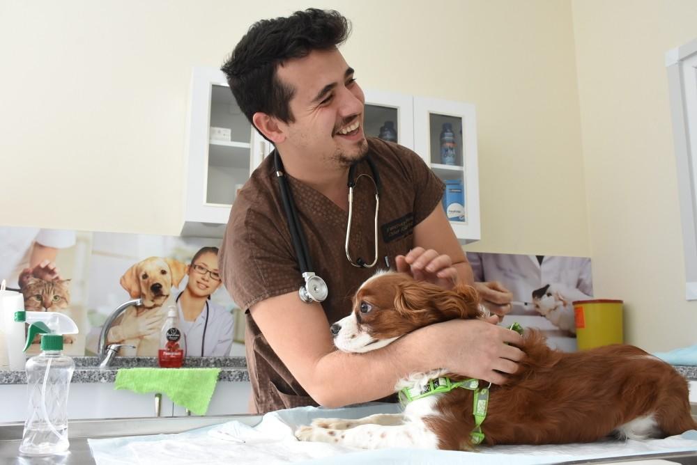 Kabasakal treats animals in his clinic at Bartu0131n.
